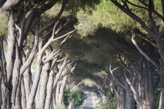 Il viale del Molinaccio nei pressi dell'ingresso dell'agriturismo