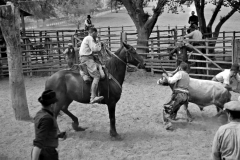 Merca del bestiame