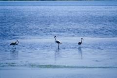 La laguna di Orbetello e i fenicotteri