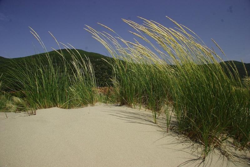 alberese-spiaggia-di-collelungo-2052