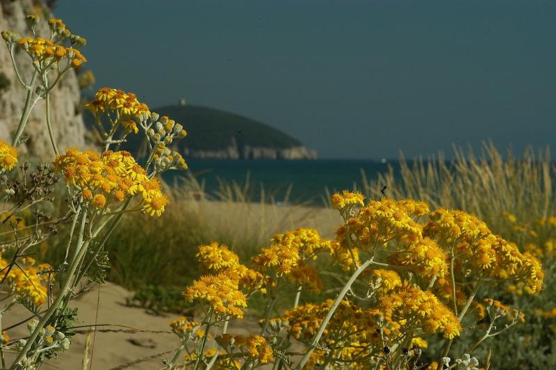 prm-alberese-spiaggia-di-collelungo-dsc_3910
