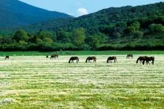 cavalli-e-margherite