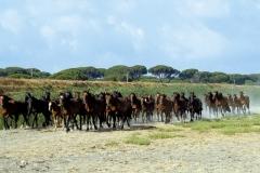 cavalli-parco-animali