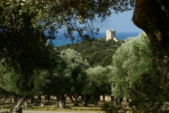 foto-g-anselmi-torre-collelungo