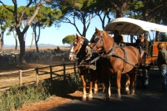 foto-carrozza