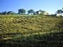 Terre del Morellino e Scansano