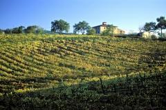 vigne e campagne a Scansano